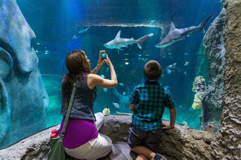 sea aquarium entrance fee skegness sea orlando aquarium admission