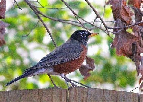 American Backyard Birds by House Garden Common Backyard Birds Of The Eastern Us