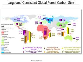 forests play a major role as carbon sink say scientists