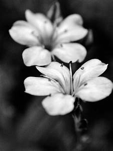 Two Flowers black and white nature photography