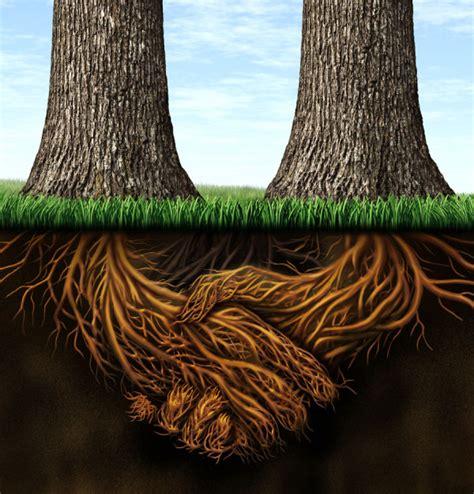 两颗大树,土下的树根握手高清图片_搜图网