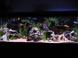 African Cichlid Tank - Setup Guide - AquariumStoreDepot