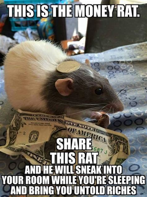 Rodent Meme - money rat if you see this image while scrolling know your meme