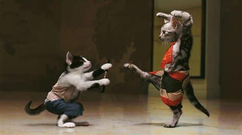 Funny Cat Wallpaper Hd  Hd Wallpaper