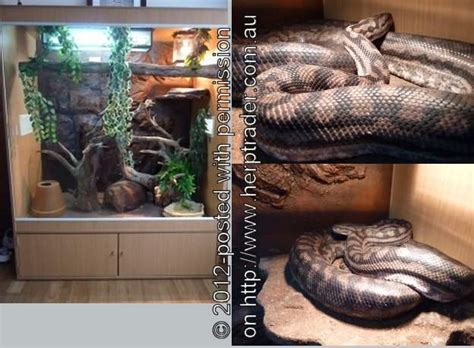 Carpet Python Enclosure How To Clean Grease Off Wool Carpet Red Hairdressing Can I Get Candle Wax Out Of My Best Cleaner Solution For Coffee Stains Remove Scentsy Unlimited Pine City Mn Hollywood Floor Runner Cost Per Sq Ft Installed