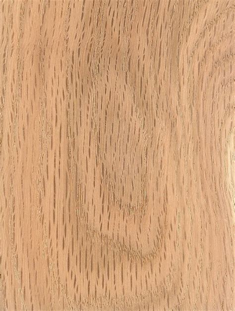 lumber oak black oak the wood database lumber identification hardwood