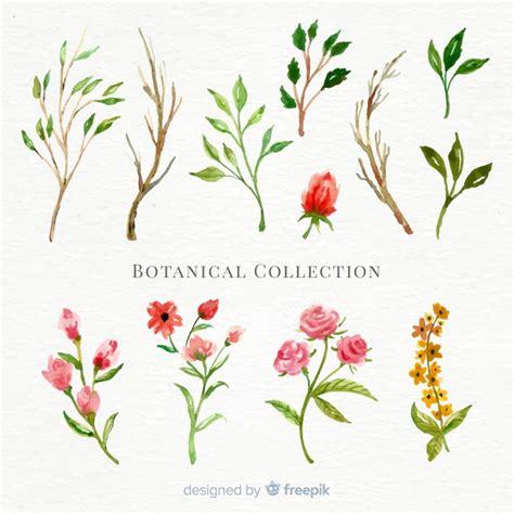 fiori botanica collezione di fiori botanici dell acquerello scaricare
