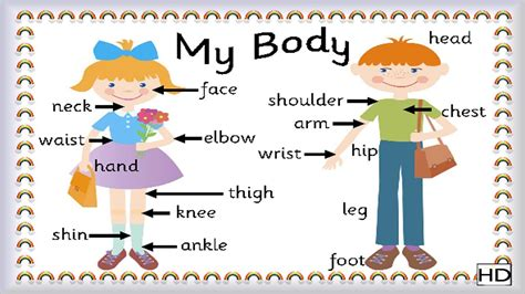 let us know our body external fun n learn fun learning