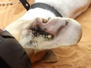 Anti Allergie Hund : les gestes quotidiens pour prot ger votre animal contre les tiques soigner son animal ~ Orissabook.com Haus und Dekorationen