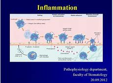Inflammation 2012 Pathophysiology and Neuroscience