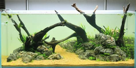 aquascaping with driftwood driftwood aqua rebell