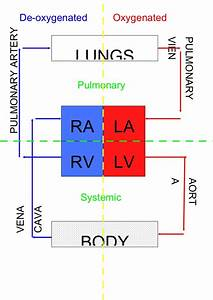 Block Diagram Of Heart