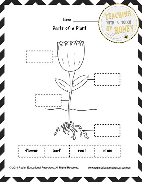 classroom freebies freebie label the plant tiered 731 | Plants Worksheets 2