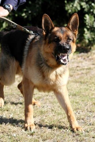 dog trainer dog myths  rank  dominance