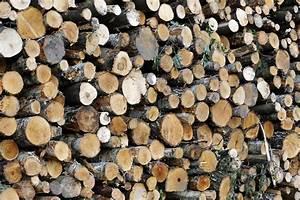Filztasche Für Holz : extrem verdichtetes holz neuer super baustoff geeignet f r panzerung n ~ Markanthonyermac.com Haus und Dekorationen