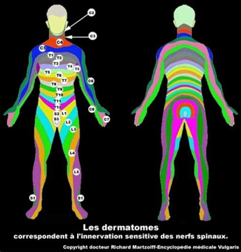 application bureau image photo dermatomes territoires nerveux neurologie
