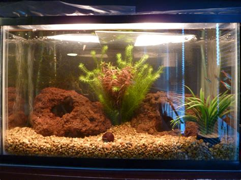 african dwarf frog tank setup pictures to pin on pinterest