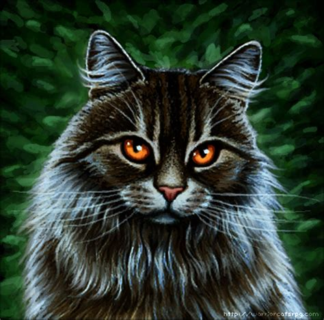 warrior cat my warrior cats pictures longhaired brown tabby cat