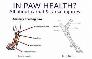 Dog Anatomy Hock