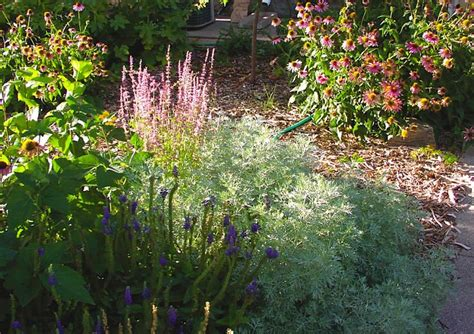 how to divide perennials how to divide perennials
