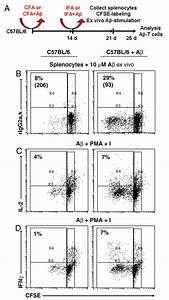 T Cell Mediated Cerebral Hemorrhages And Microhemorrhages During Passive A U03b2 Immunization In
