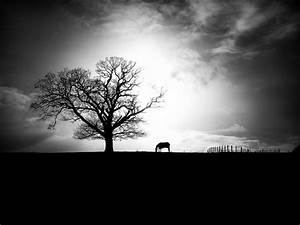 Black and White Landscape with Horse | Nick Page | Flickr
