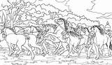 Coloring Horses Horse Wild Spirit Lucky Kleurplaat Ausmalbilder Zoo Netart Herd Pokemon Pokin Ausdrucken Zum Kleurplaten Paarden Mewarna08 Template sketch template