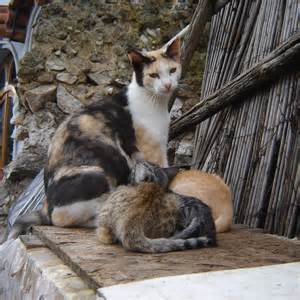 i cats forcing starvation on feral cats city council needs