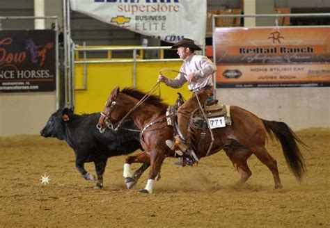 horses smart horse play very tulare cow reined reiner performance