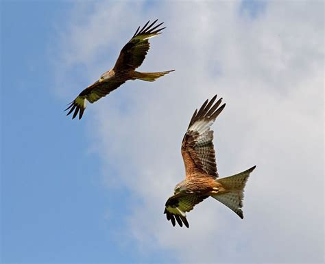 Red Kites Over The Black Isle, Scottish Dance Instructions