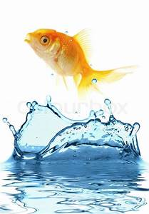 The gold small fish jumps out of water   Stock Photo ...