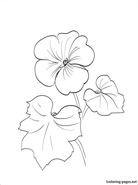 geranium coloring page  print  coloring pages