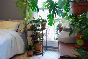 How To Increase The Humidity For Your Houseplants