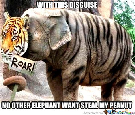 Elephant Memes - elephant memes best collection of funny elephant pictures