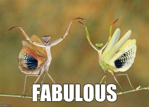 Fabulous Memes - fabulous imgflip