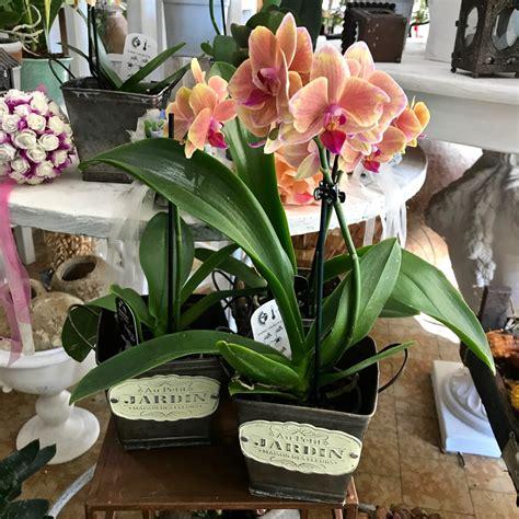 Fiori A Domicilio Firenze by Orchidea Phalaenopsis Fiorit Fiori A Domicilio A Firenze