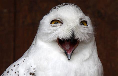 eulen bilder lustig lustige grimassen bei der eulen schwerarbeit kuriose tierwelt