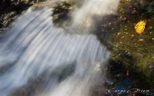 Một mùa Thu để nhớ, để thương… và để hoài niệm (7) – Carpe ...
