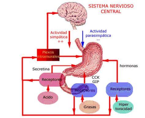 fisiologia gastroenterologia