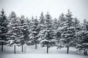 photo of winter trees free images