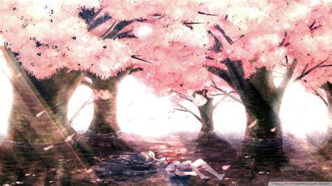 hd    anime cherry blossom cherry