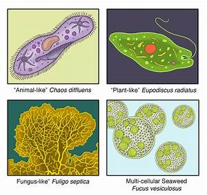 Protists range from single-celled amoebas to multicellular ...