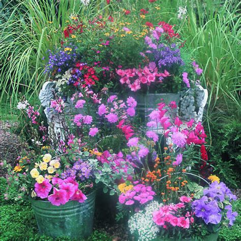plant a country garden in buckets sunset