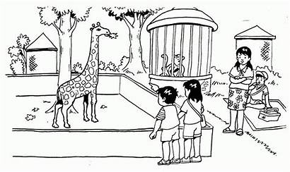Kebun Binatang Gambar Mewarnai Contoh Sketsa Tempat
