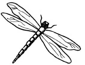 basic outlines of dragonflies mission creek animals