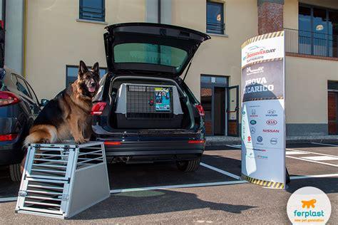 gabbie trasporto cani auto trasporto in auto informazioni e accessori