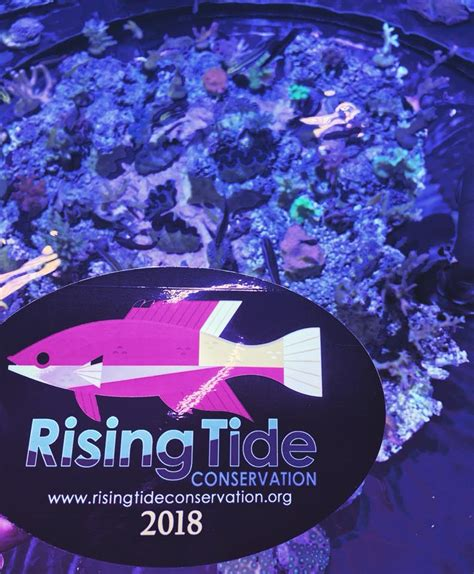 A Rising Tide Lifts All Boats Deutsch by Rising Tide Conservation Home Facebook