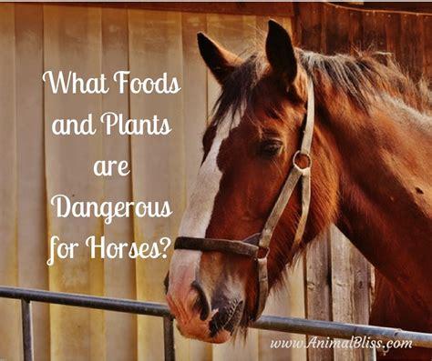 horses dangerous plants foods eat animals know