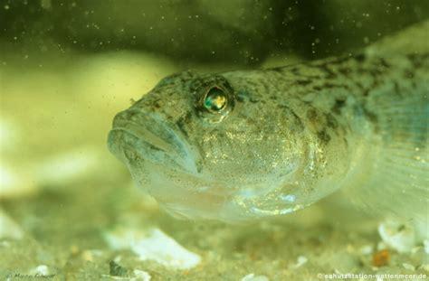 schutzstation wattenmeer tiere fische