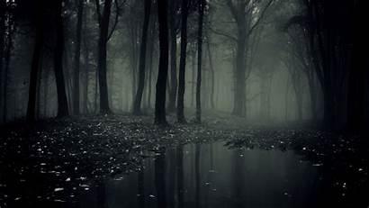 Dark Backgrounds Forest Background Pixelstalk Lion